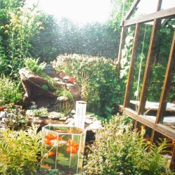 Hans drivhus med plads til guldfiskene