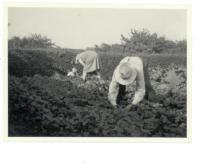 Mine morforældre i marken et stykke hen ad Mathavej i Holbæk